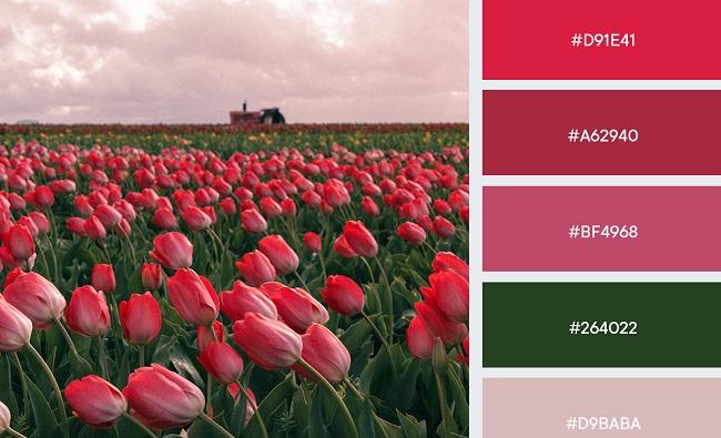 Gợi ý bảng màu đẹp mắt từ cảm hứng hoa